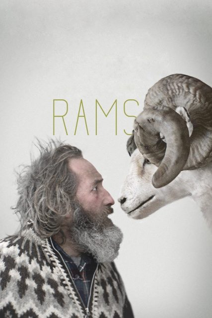 "Poster for the movie ""Rams"""